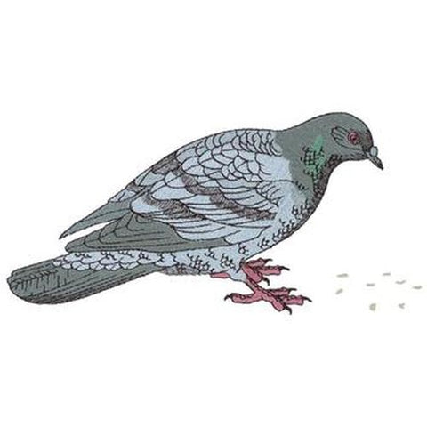 Pigeon, Dove, Bird, Feeding Embroidered Patch