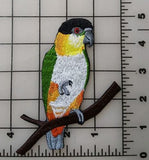 Black Capped Caique, Black Headed Caique Embroidered Patch