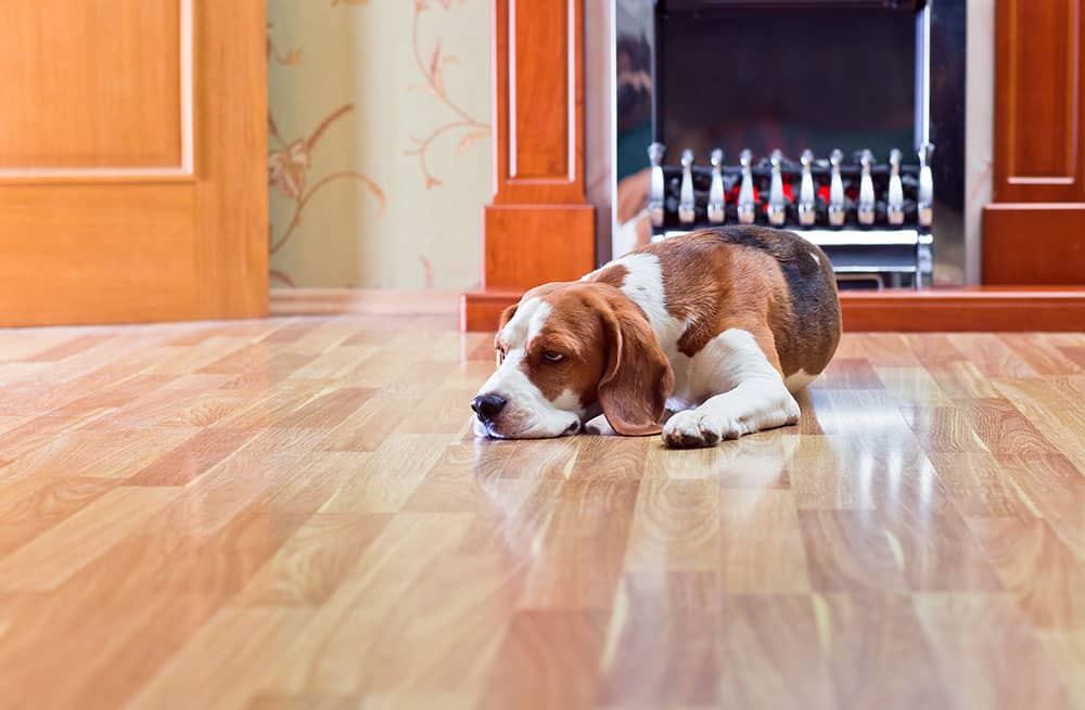 How to Minimise Scratches on Timber Flooring
