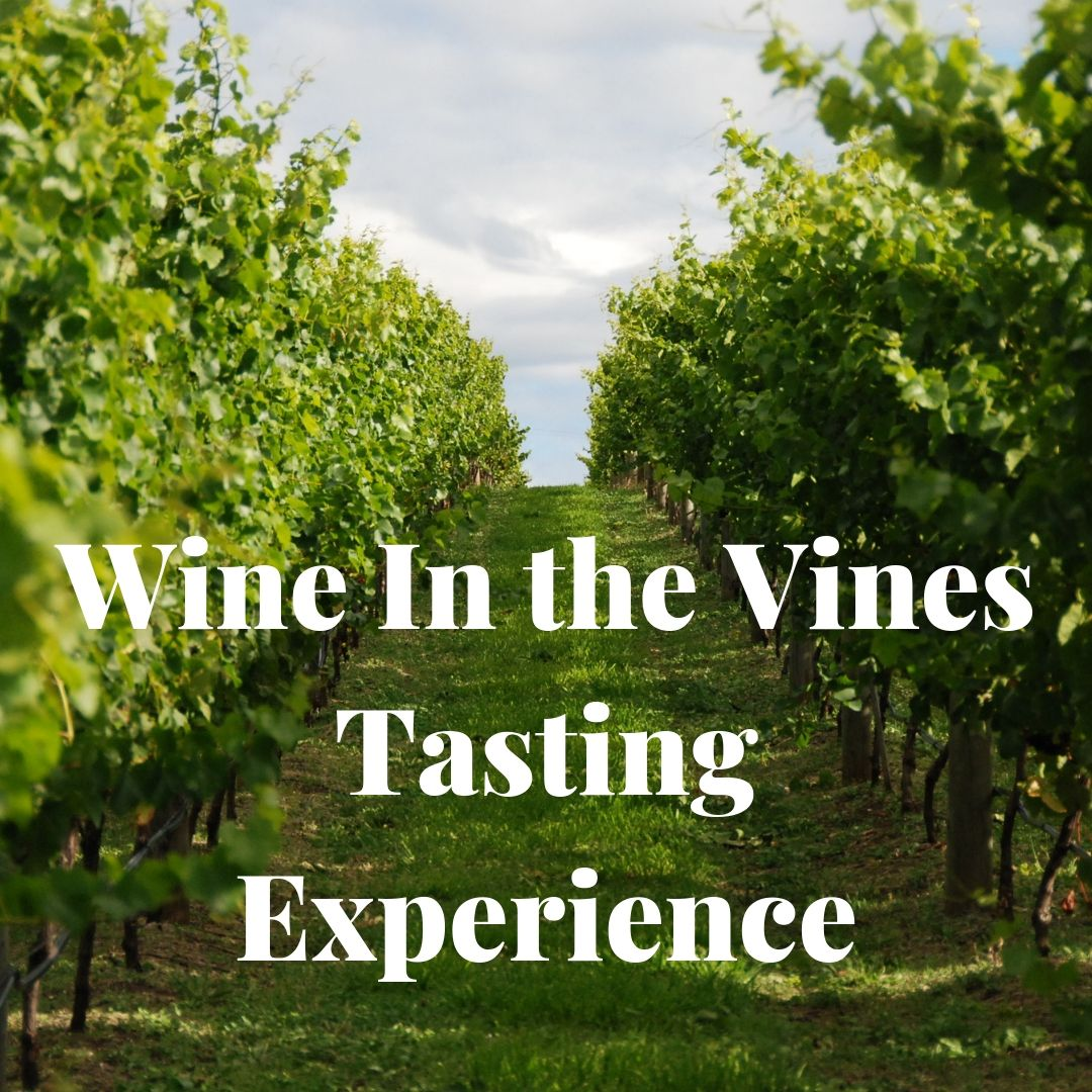 Bangor Wine Tasting in the vines tour
