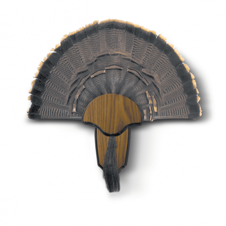 HS STRUT Turkey Tail & Beard Mount Kit - 00849 - Hunters Specialties