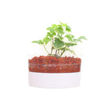 2-in-1 Bundle - Smart Holders (Advance Plants) - In Vitro / Botanicaire