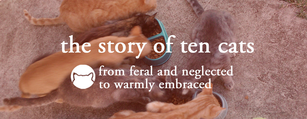 the CAT TONGUE, MY PET DESIGNS, about us, story of ten cats and owner