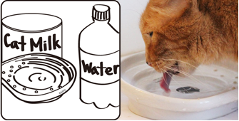 the CAT TONGUE, additional points, serve water or milk