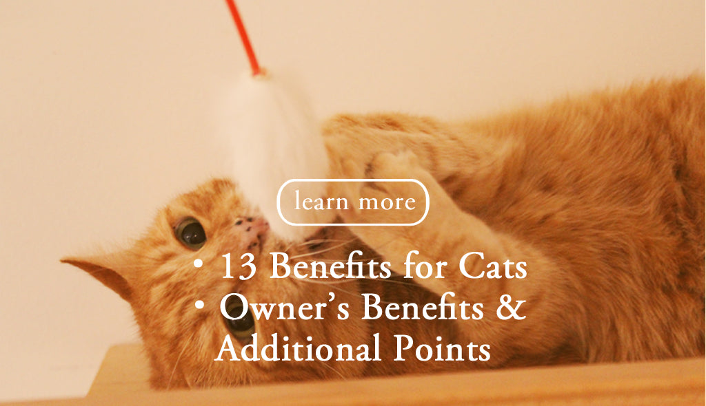 the CAT TONGUE, learn more benefits for cats owners benefits & addiotional points
