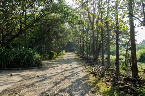 Road leading up to our workshop on the outskirts of Chiang Mai