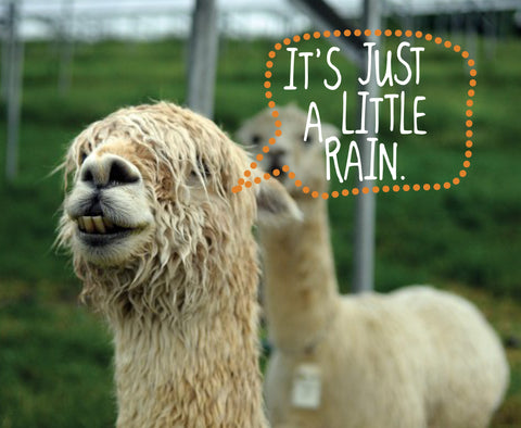 What Makes Alpaca Clothing Superior For The Cold And Wet Season?
