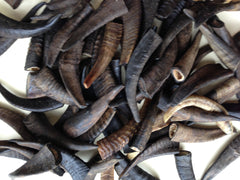 GOAT HORNS - SMALL (90-130mm ave.) - one of the longest lasting chews there is!!