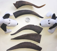 GOAT HORNS - LARGE 150-200mm. One of the longest lasting chews.