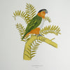 Black Headed Parrot, Fanny Shorter - CultureLabel - 1