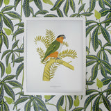 Black Headed Parrot, Fanny Shorter - CultureLabel - 2