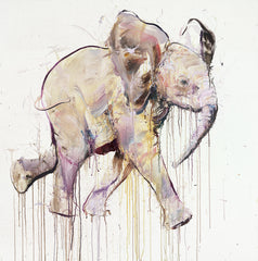 Young Elephant IX, Dave White