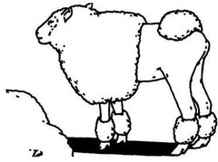 Sheep, Outline Editions Alternate View