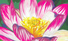 Water Lily, Chloe Croft - CultureLabel - 2 (detail- close up of Water Lily)