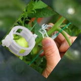 Garden Plants Folwers items packs of 100 Joltre9400