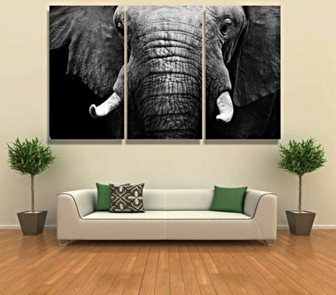 3 Majestic Black & White Elephant Canvas