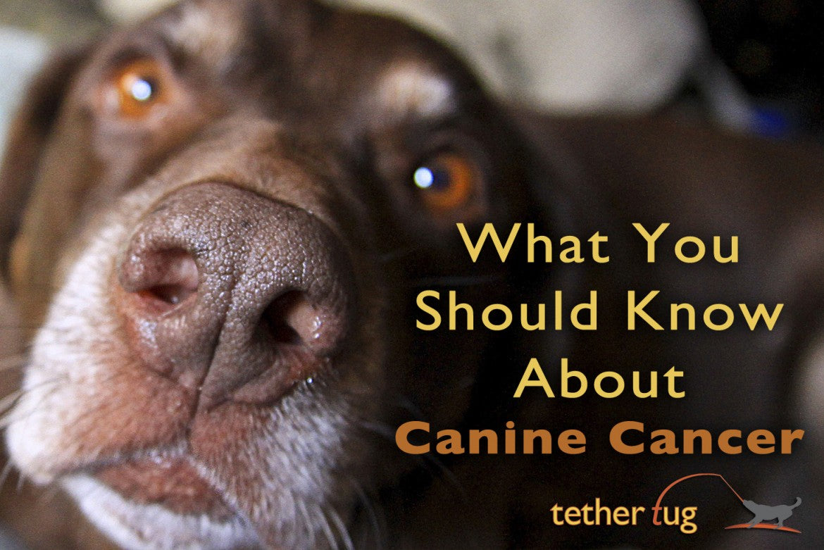 Can You Catch Cancer From Dogs