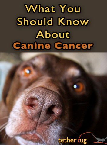 What You Should Know About Canine Cancer - Tether Tug