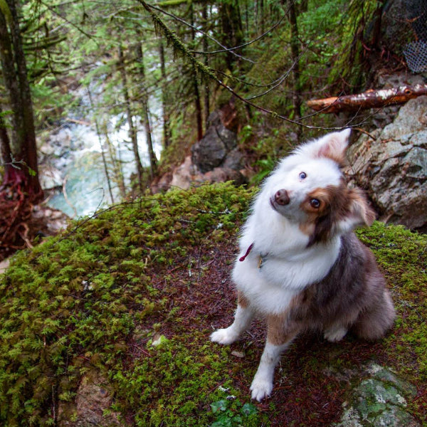 15 images that prove the Pacific Northwest is heaven on earth for dogs