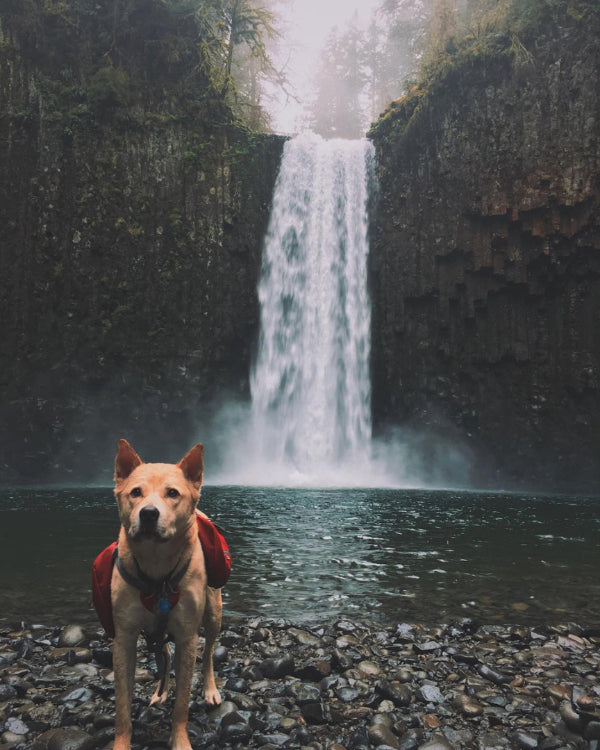 15 pictures that prove the Pacific Northwest is heaven on earth for dogs