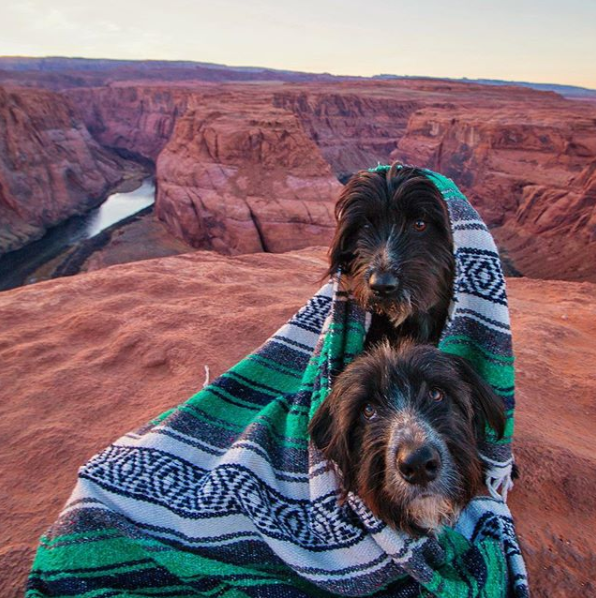 Puppies rescued from desert visit Horseshoe Bend