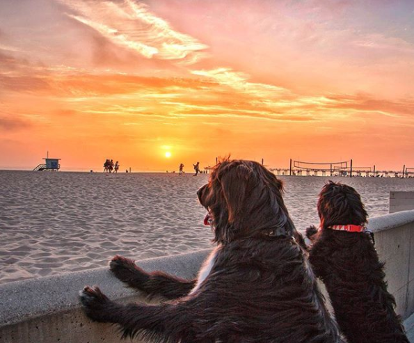 Puppies rescued from desert visit California beach