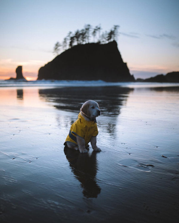 Puppy poses on beach in Pacific Northwest