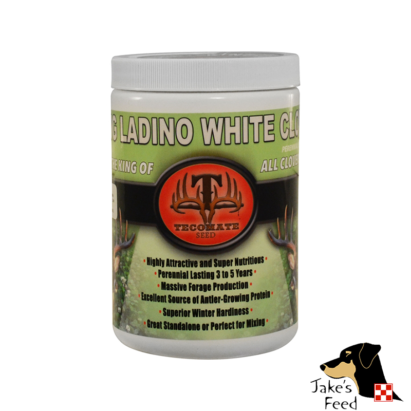 TECOMATE KING LADINO WHITE CLOVER SEED 1#