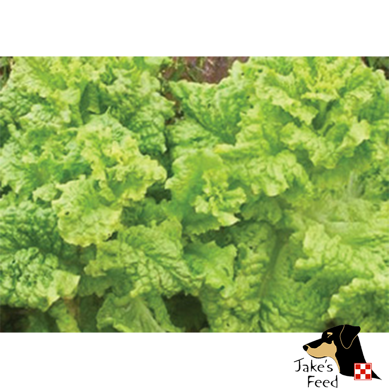 Black Seeded Simpson Lettuce 1oz
