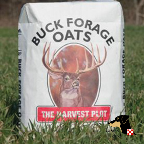 BUCK FORAGE OATS 50#