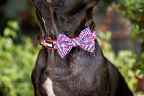 DOG COLLAR AND BOW TIES