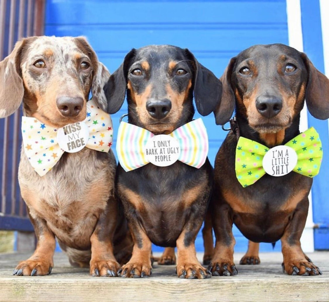 BADGE BOW TIES