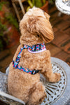 "B&P ""Tropical Islands"" Adjustable Harness - Barkley and Pips"