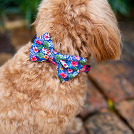 "B&P ""Tropical Islands"" Collar & Bow Tie - Barkley and Pips"