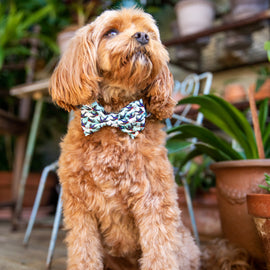 "B&P ""Mate for Life"" Collar and bow tie - Barkley and Pips"