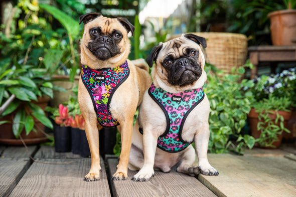 REVERSIBLE HARNESS: Wild at Heart