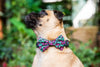"B&P ""Wild at Heart"" Collar and Bow Tie - Barkley and Pips"