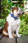 "B&P ""Shooting Stars"" Collar and Matching Bow Tie - Barkley and Pips"