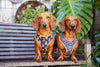 "B&P ""Spaced Out"" Reversible Harness - Barkley and Pips"
