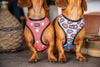 "B&P ""Love Bites"" Reversible Harness - Barkley and Pips"