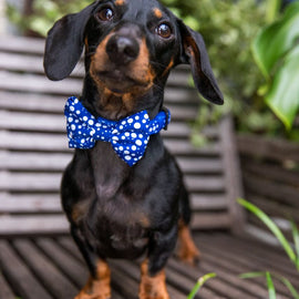 DOG COLLAR <br> & BOW TIE: <br> Pop Top