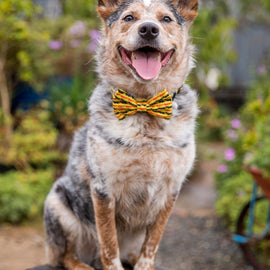 "B&P ""Snappy Dresser"" Collar and Bow Tie"