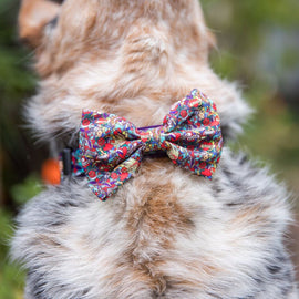 "B&P ""Rat-a-Tat-Tat"" Collar & matching Bow Tie"