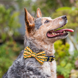 DOG COLLAR <br> & BOW TIE: <br> Snappy Dresser