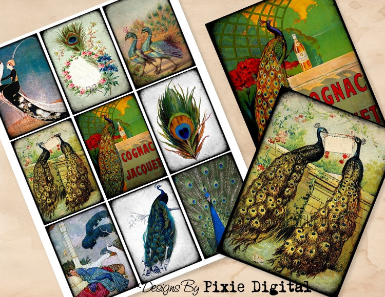 PEACOCK Digital Collage Sheet Download Printable Clipart Gift Hang Tag Journal Cards ATC Scrapbooking Exotic Bird