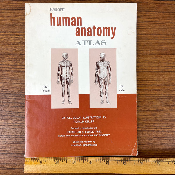 Hammond Human Anatomy Atlas - color illustrations - 1960s vintage - NextStage Vintage