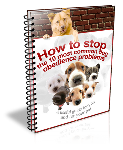 How To Stop The 10 Most Common Dog Obedience Problems