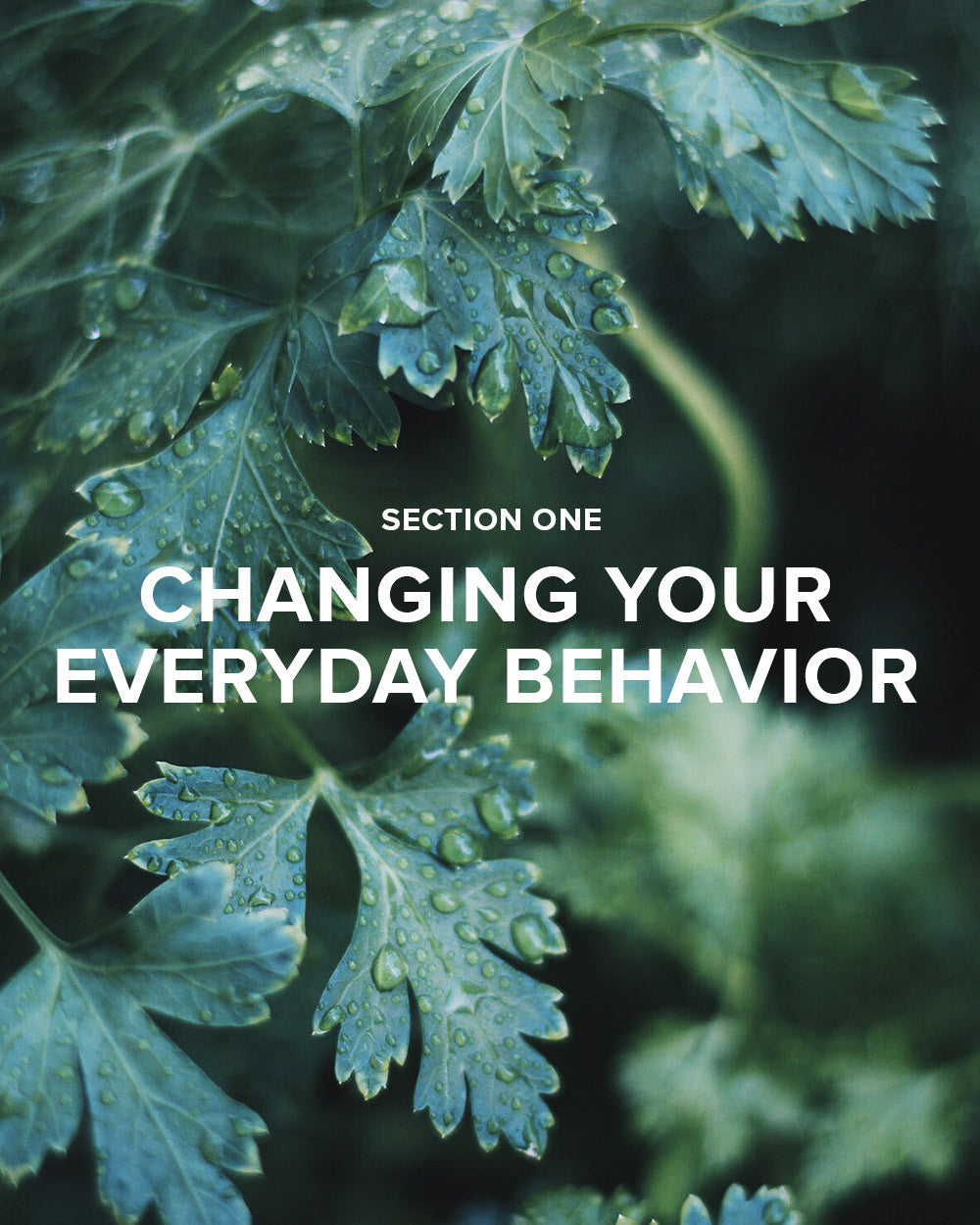 Section 1: Changing Your Everyday Behavior