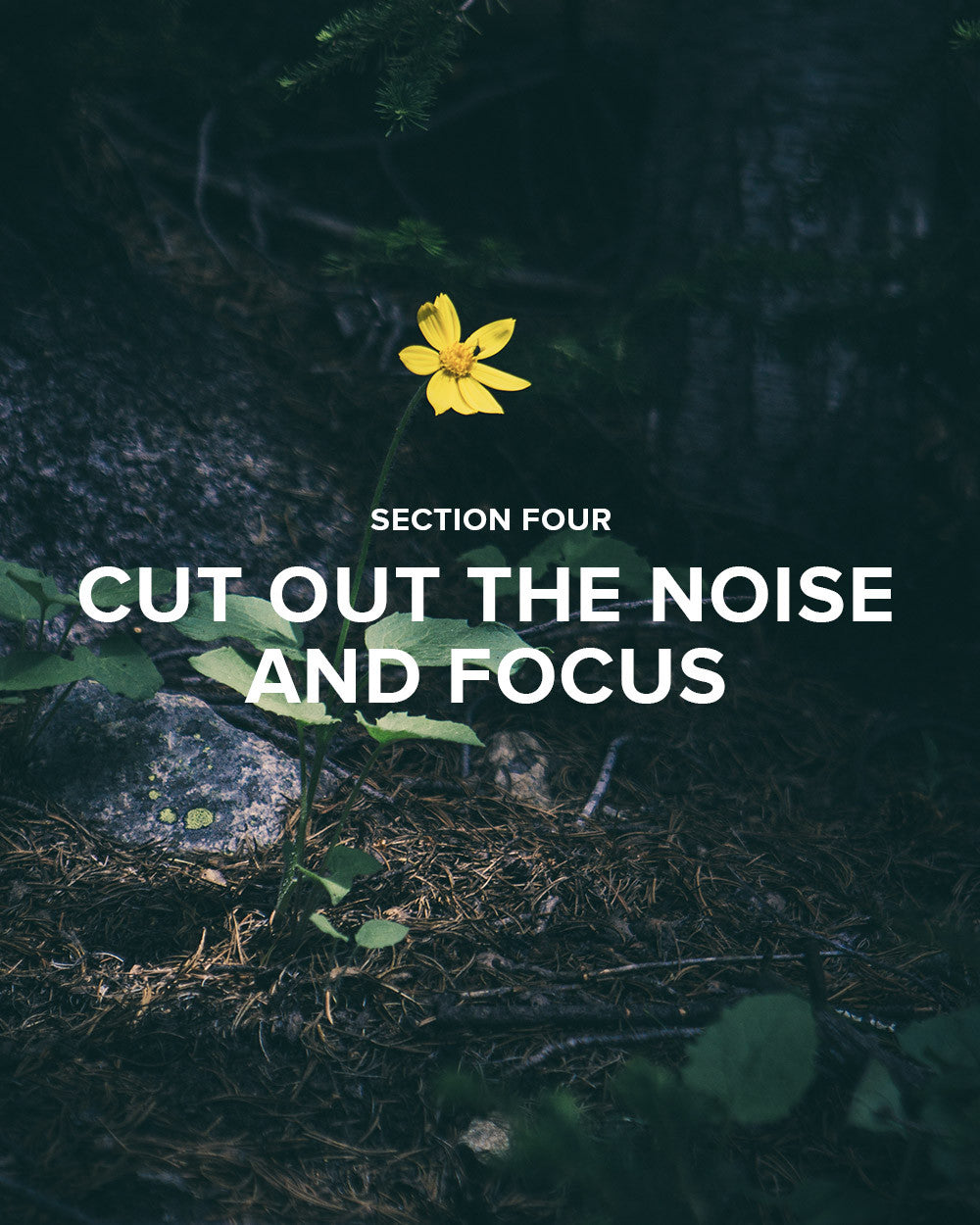 Section 4: Cut Out the Noise and Focus