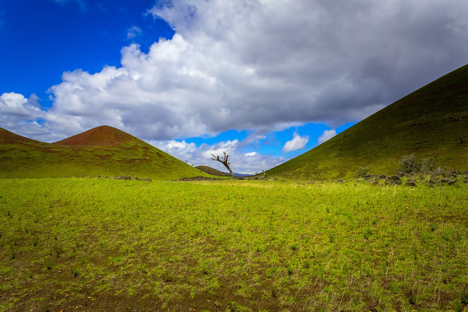 Landscape photograph of volcanic hills with a carpet of green grass - Big Island, Hawai'i